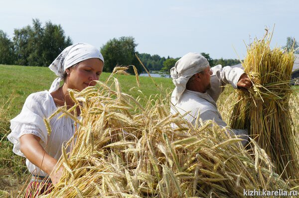 поля засеянные пшеницей занимали кредит на карту сбербанка на длительный